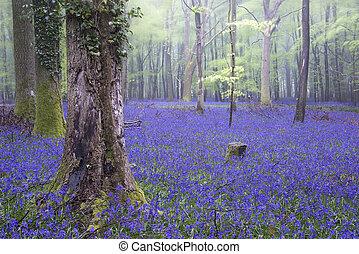 """""""Vibrant Bluebell Teppich, Frühlingswald neblige Landschaft"""