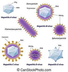 viren, eps10, hepatitis, vergleich