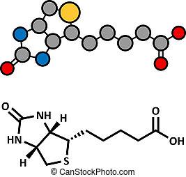 Vitamin B7 (biotin) Molekül.