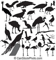 vogel, vektor, silhouette, satz