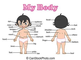 Vokabularer Körperteil