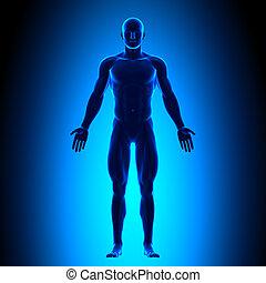 Voller Körper - Frontansicht - blaue Cone