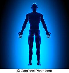 Voller Körper - Rückenansicht - blaues Konzept.