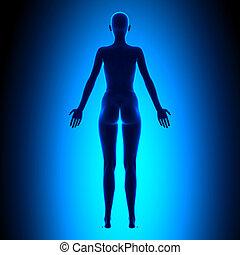 Voller weiblicher Körper - Rückblick - blaues Konzept.
