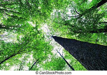 Wälder.