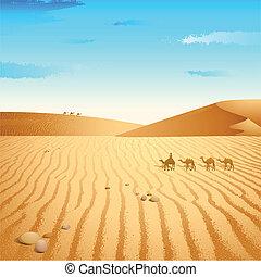 wüste, kamel