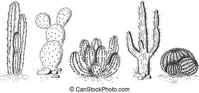 Wüstenkaktusen und Sukkulents Set