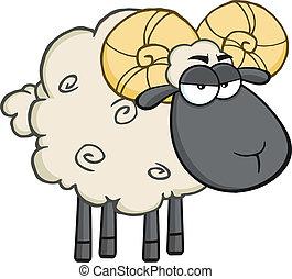 Wütend, schwarzer Kopf rammen Schafe.