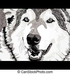 Wütendes Wolfsgesicht.