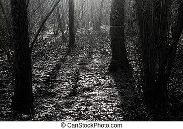 Wald am Morgen.