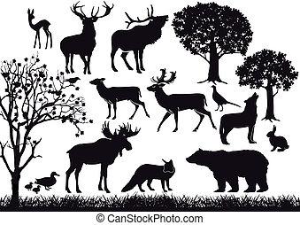 Wald und wilde Tiere.