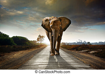 Wandernder Elefant