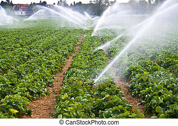 wasser- spray, landwirtschaft