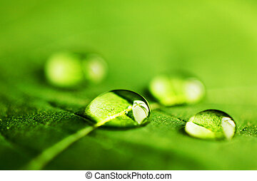 Wassertropfen auf Blattmakro.