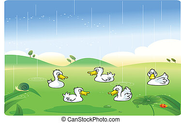 Weiße Enten spielen im Regen.