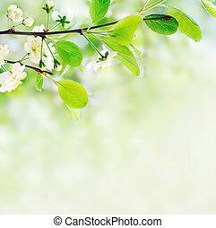 Weiße Frühlingsblumen auf einem Ast