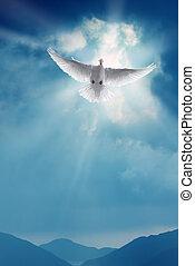 Weiße heilige Taube fliegt in blauer Himmel.