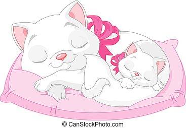 Weiße Katzen.