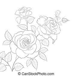 Weiße Rose isoliert.