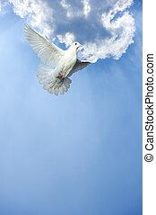 Weiße Taube im freien Flug