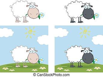 Weiße und schwarze Schafssammlung