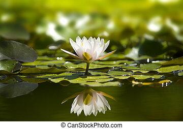 Weißer Wasserrutsch im Naturteich.