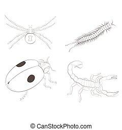 weißes, freigestellt, hintergrund., insekten, satz