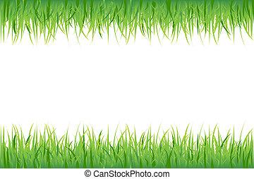 weißes, gras, hintergrund