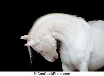 Weißes Pferd, isoliert auf schwarz.