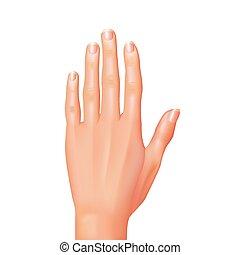 weißes, vektor, freigestellt, hand