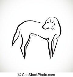 weißes, vektor, hund, hintergrund