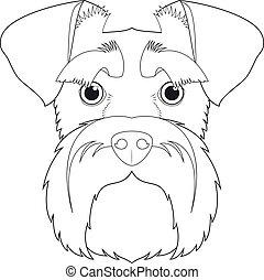 weißes, vektor, leicht, hund, karikatur, färbung, schnauzer, freigestellt, hintergrund, illustration.