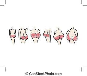 Weibliche Brust-Sketch für dein Design.