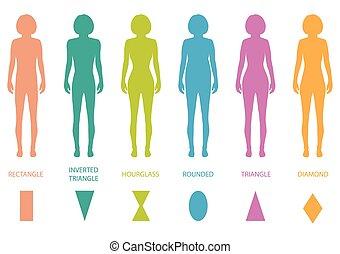 Weibliche Körpertypen.