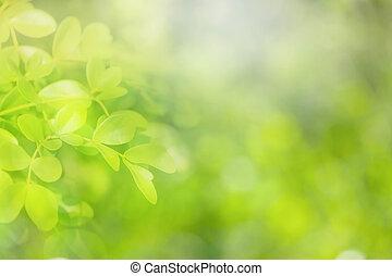 Weicher Fokus natürlicher grüner Hintergrund.