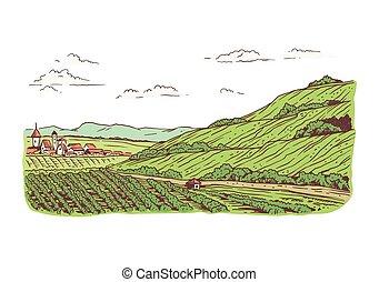 weinberge, landschaftsbild, abbildung, vektor, ländlich, gepflanzt, felder
