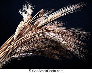 Weizen in schwarzer Botto
