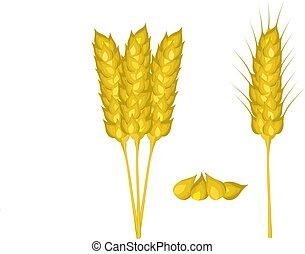 Weizen-Ohren sind auf weiß gestellt. Vector Illustration: 10