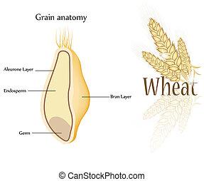 Weizen und Getreide