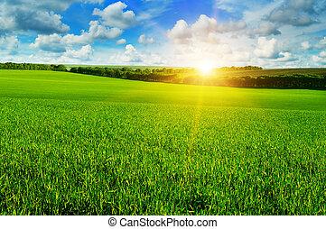 Weizenfeld und Sonnenaufgang am blauen Himmel.