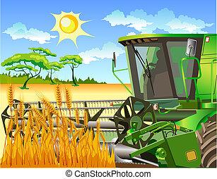 Weizenfelder und Kombi