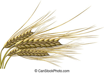 Weizenkorn