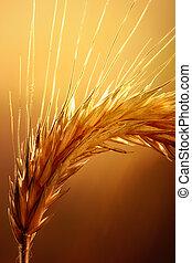 Weizenmakro