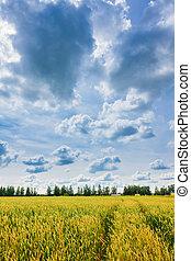 Weizenohren und bewölkter Himmel