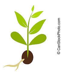 wenig, vektor, morphology., -, pflanze, abbildung, samen, wachsen