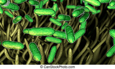 whooping, bordetella, pertussis, flugrouten, husten, menschliche , bakterien