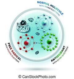 Wie antioxidant gegen freie Radikale wirkt. Antioxidant spendet fehlende Elektronen an Free Radikale, jetzt sind alle Elektronen gepaart.