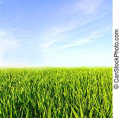 Wiese mit grünem Gras und blauem Himmel mit Wolken.