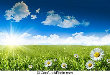 Wilde Gänseblümchen im Gras mit einem blauen Himmel