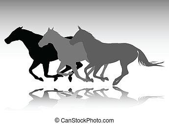 Wilde Pferde rennen